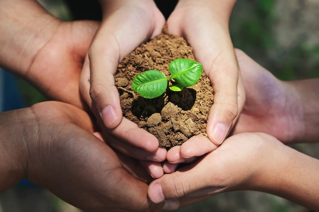 Mani che tengono un piccolo albero