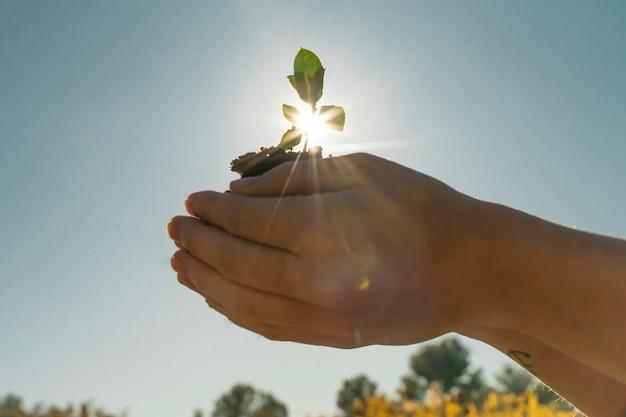 Mani che tengono pianta giovane su sfondo verde sfocato con luce solare
