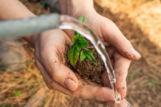 Mani che tengono pianta giovane su sfondo naturale sfocato con luce solare e acqua