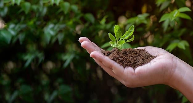 Mani che tengono pianta giovane su sfondo naturale