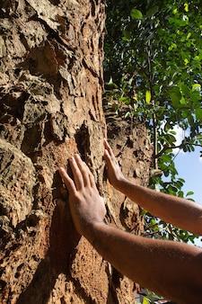 Consegna una grande struttura ad albero in una giornata di sole