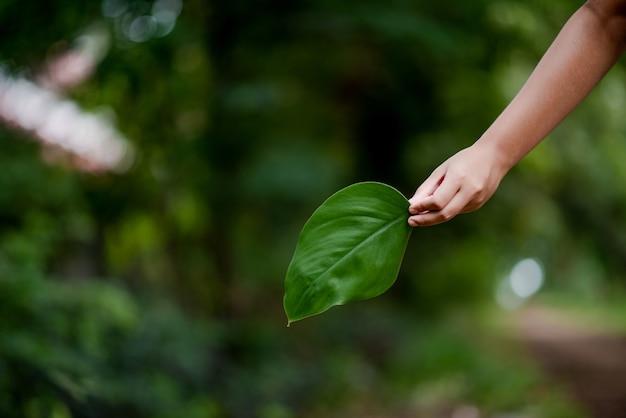 Le mani e la natura amano l'amore luminoso devono darsi amore e bellezza in modo naturale