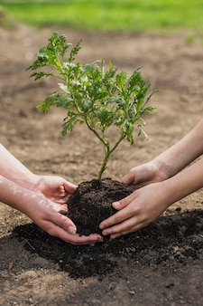 Mani che piantano albero