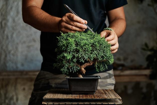 Mani che potano un albero dei bonsai su un tavolo da lavoro. concetto di giardinaggio.