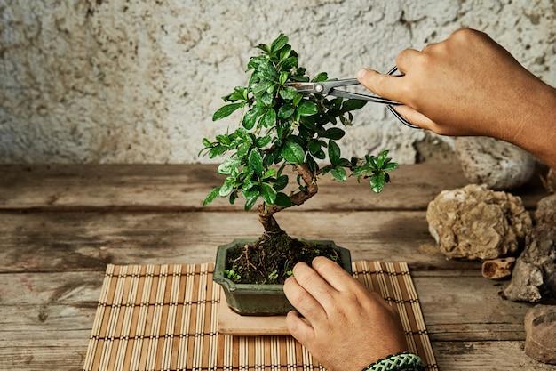 Mani che potano un albero dei bonsai