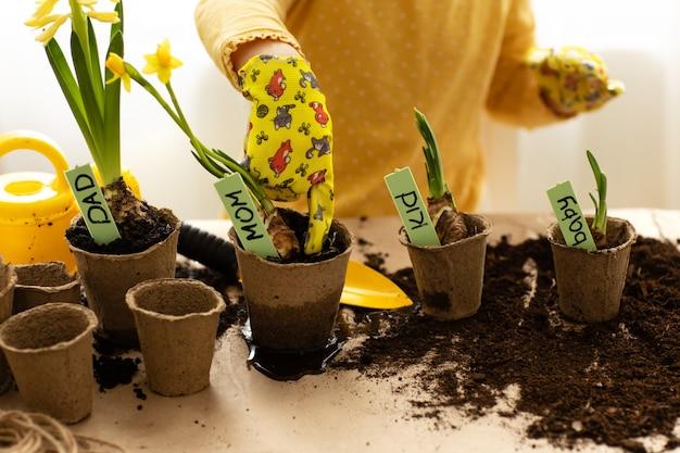 Le mani di un bambino piccolo hanno piantato semi di bulbi da fiore al coperto a casa