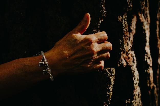 Mani che toccano un vecchio albero, luce solare.