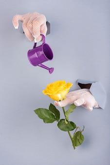 Mani con mani guantate che saldano da un foro inferiore blu con un annaffiatoio e una rosa gialla.
