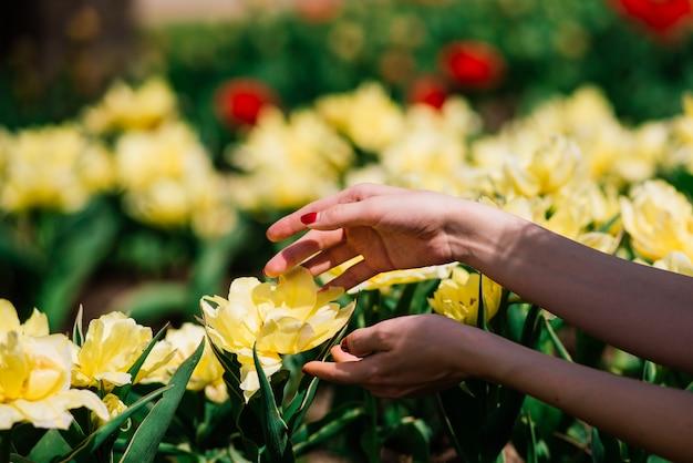 Mani della donna con fiori gialli