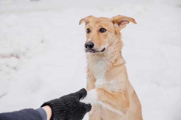 Stretta di mano con cane marrone. proprietario con cane adorabile nella foresta