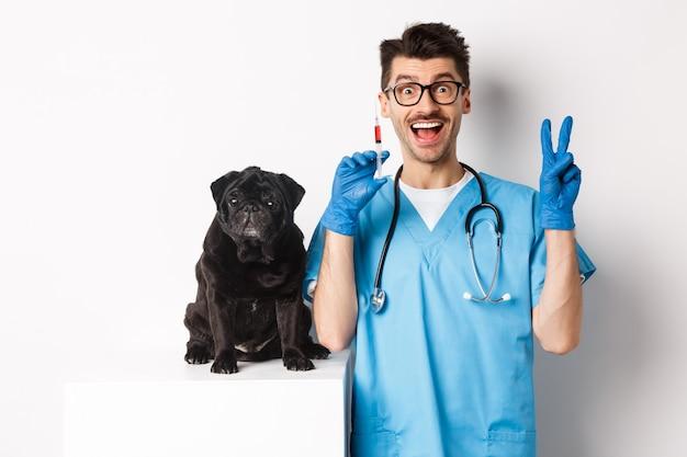 Bel medico veterinario che tiene in mano una siringa e in piedi vicino a un simpatico carlino nero, cane vaccinante, sfondo bianco