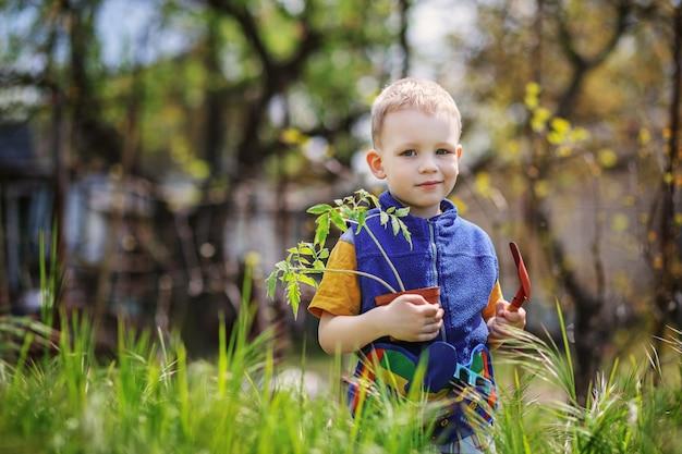 Bel ragazzino biondo che pianta e giardinaggio piantine di pomodoro in giardino o fattoria in primavera