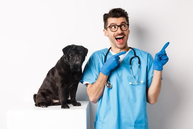 Bel giovane medico presso la clinica veterinaria che punta le dita nell'angolo in alto a destra e sembra stupito, in piedi vicino a un simpatico cane carlino nero, sfondo bianco.
