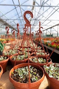 Vasi di plastica sospesi con piante da fiore giovani che crescono in serra