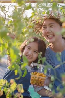 Il bambino asiatico felice che aiuta sua madre raccoglie poco pomodoro nell'azienda agricola