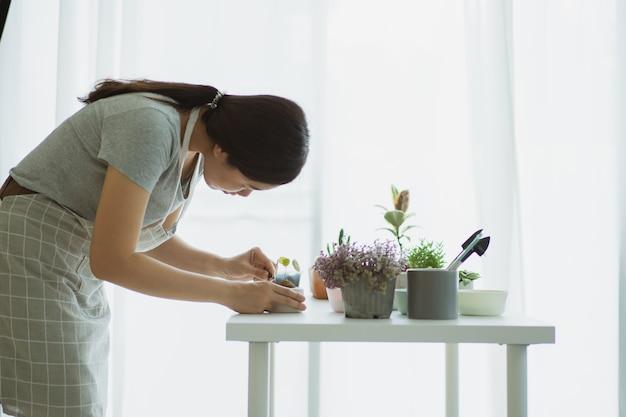 Felice donna asiatica che pianta una piccola stephania erecta craib in un vaso di argilla da vicino. piantare piante da appartamento di piccole dimensioni come attività di svago e hobby delle persone che vivono in città. zen come pianta.