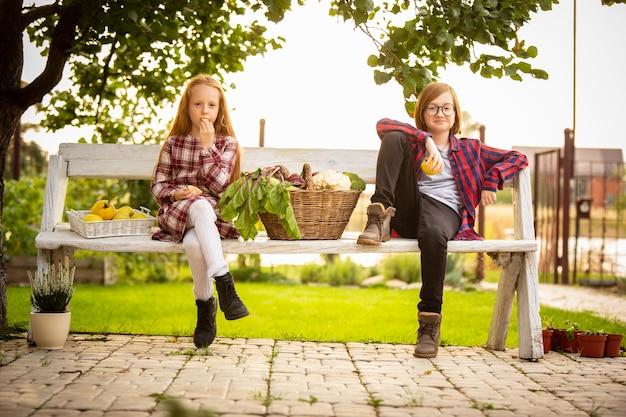 Felice fratello e sorella con cesto di verdure di stagione seduti insieme sulla panchina all'aperto