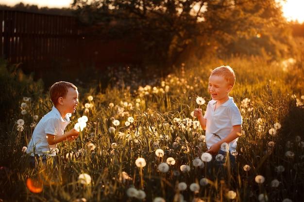 Bambini felici in estate che giocano con i denti di leone nel campo