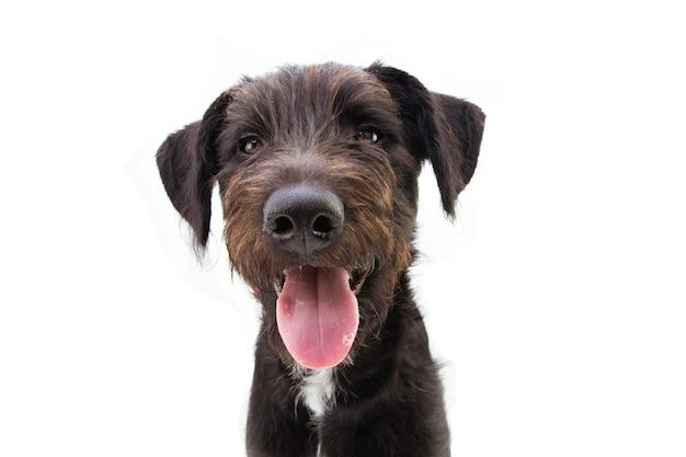 Cane felice sorridendo e con la lingua fuori