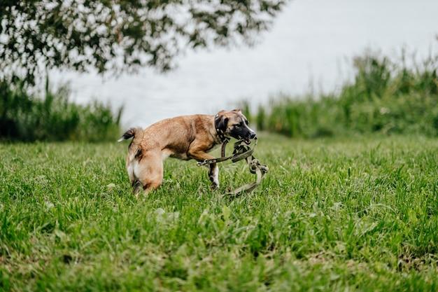 Gioco del cane felice all'aperto