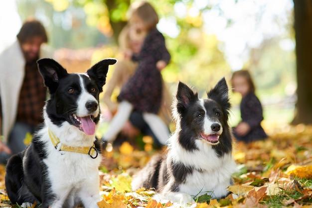 Cani felici e famiglia in sottofondo