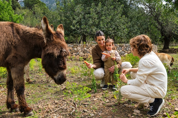 Madre etnica felice con bambini che alimentano asini carini con le carote