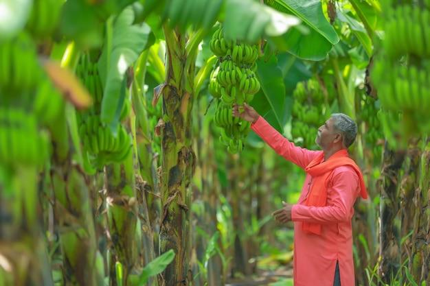 Coltivatore indiano felice che tiene in mano banano crudo