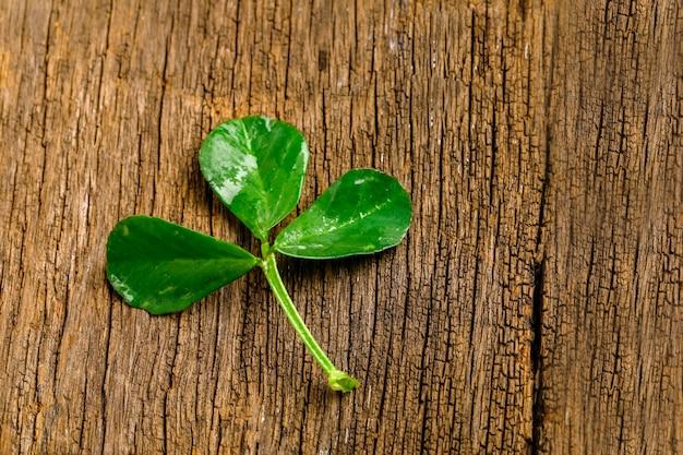 Il modello di happy saint patrick con foglie di trifoglio di trifoglio