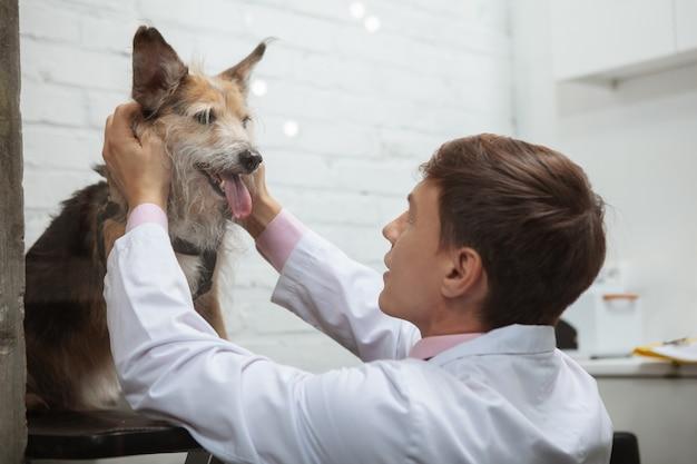 Cane da rifugio felice che respira con la lingua fuori mentre il veterinario lo accarezza dopo la visita medica