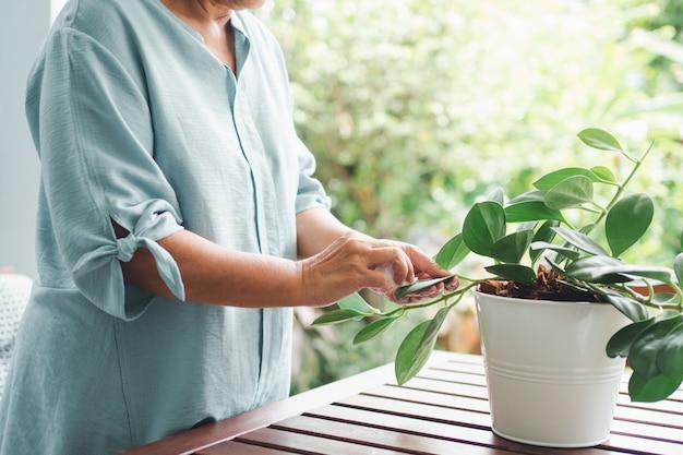 Una donna anziana anziana asiatica felice e sorridente sta piantando per un hobby dopo il pensionamento in una casa.