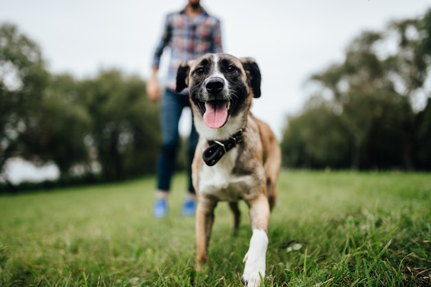 Cane sorridente felice che esamina macchina fotografica all'aperto
