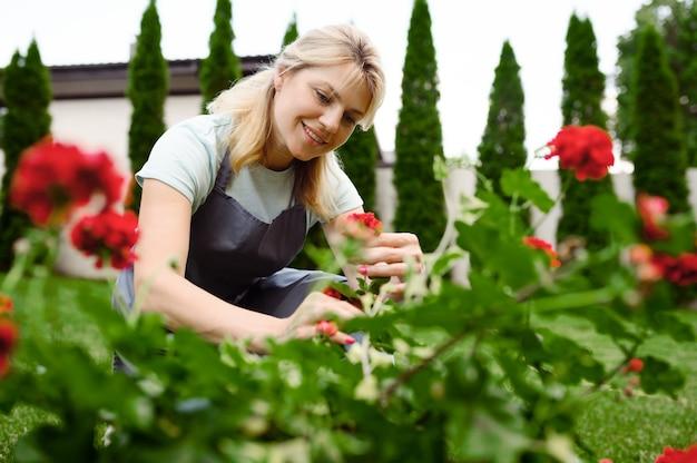 La donna felice in grembiule lavora con i fiori nel giardino. il giardiniere femminile si prende cura delle piante all'aperto, dell'hobby del giardinaggio, dello stile di vita del fiorista e del tempo libero