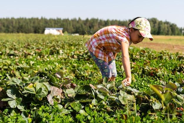 Ragazza felice del bambino in giovane età che raccoglie e che mangia le fragole su una piantagione