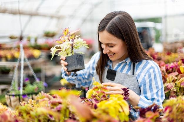 Felice giovane donna sorridente che lavora con i fiori nella scatola di contenimento della serra piante multicolori