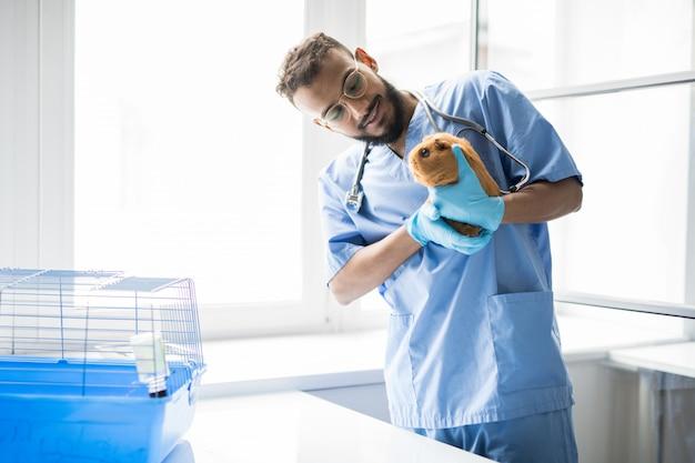 Giovane clinico veterinario felice in uniforme che tiene cavia marrone e che lo esamina durante il lavoro