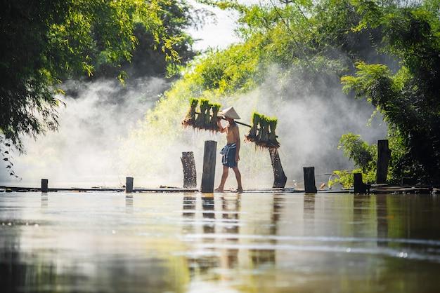 Bambino del riso della tenuta dell'agricoltore del duro lavoro sul ponte di legno