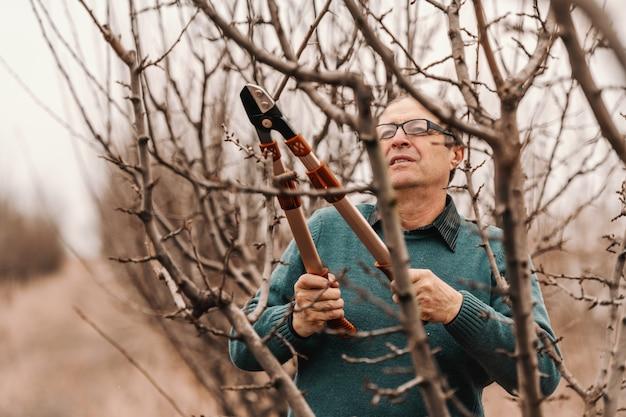 Frutticoltore caucasico adulto maturo laborioso nell'albero da frutto della potatura del ponticello alla molla.