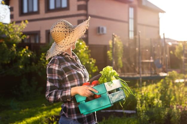 Giardiniere laborioso della giovane donna in cappello di paglia raccoglie la sua scatola di raccolta dei pomodori in estate soleggiata