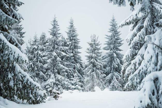 Paesaggio invernale duro bellissimi abeti innevati si ergono contro una zona montuosa nebbiosa in una fredda giornata invernale. il concetto di fredda natura nordica. copyspace