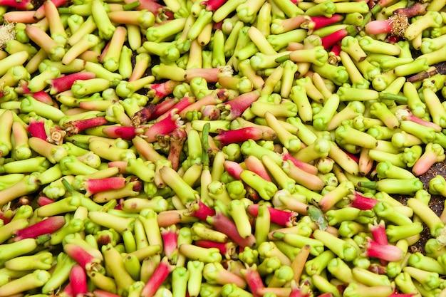 Raccolta dei germogli verdi freschi del chiodo di garofano alla piantagione