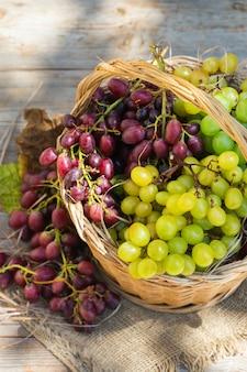 Vendemmia dell'uva da vino biologica fresca nel cesto autunno