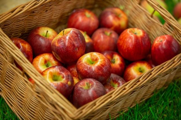 Raccolte deliziose mele rosse fresche in una cassa, pronto da mangiare, concetto di cibo di frutta