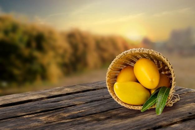 Frutta raccolta dei manghi in cestino sulla tavola di legno con il fondo dell'azienda agricola del mango.