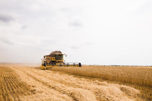 Harvester raccoglie chicchi di grano nel campo.