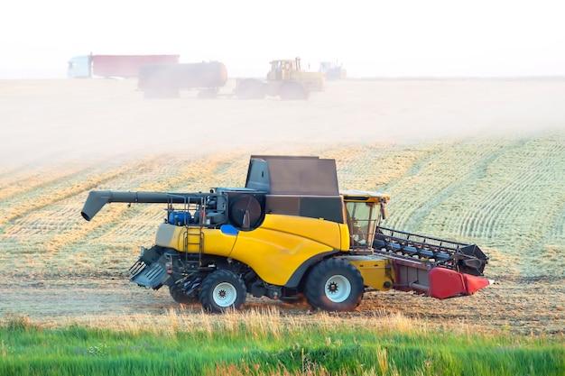 La mietitrice sta raccogliendo il grano nel campo. preparazione del grano. agronomia e agricoltura.