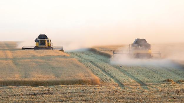 La mietitrice sta raccogliendo il grano nel campo. preparazione del grano.