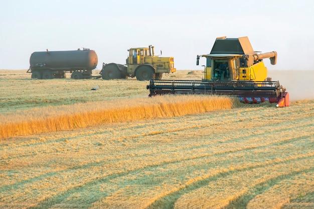 La mietitrice sta raccogliendo il grano nel campo