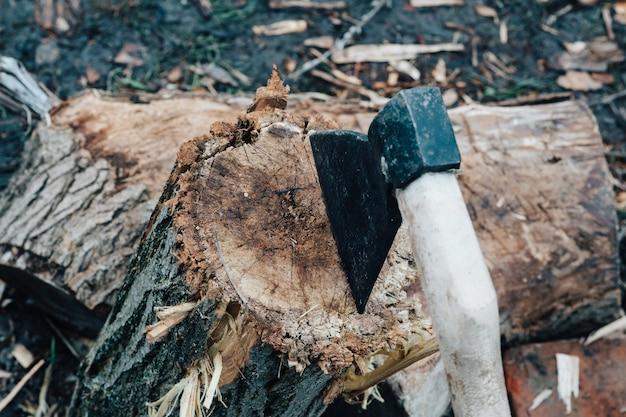 Raccolta di legna da ardere per la natura ascia invernale all'aperto per un incendio