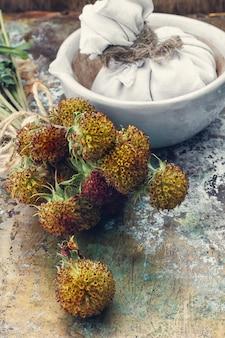 Raccolta di erbe medicinali