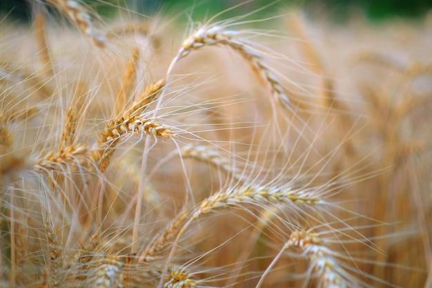 Periodo di raccolta e sfondo agricolo